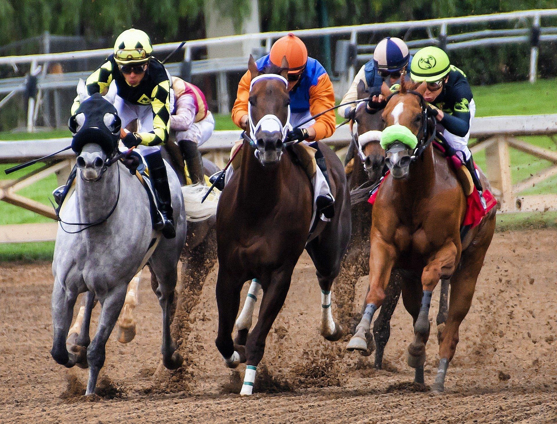 Les courses de chevaux : plus qu'un jeu, une passion entre l'homme et l'animal !
